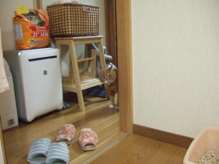 2007_junichibi1070172