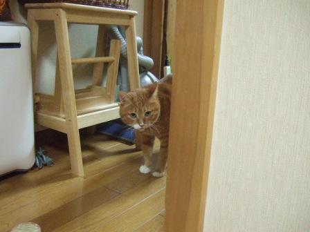 2007_junichibi1070173