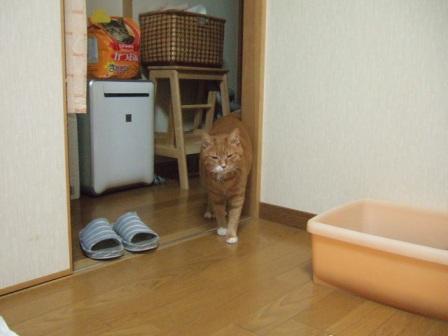 2007_junichibi1070176