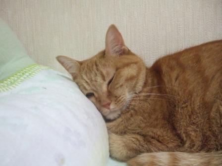 2007_junichibi1080189