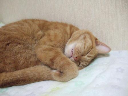 2007_junichibi1080193