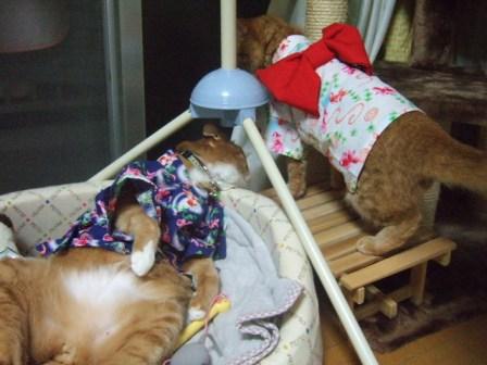 2007_junichibi1120196_1