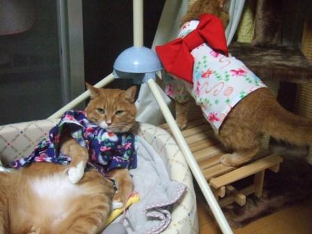 2007_junichibi1120197_1