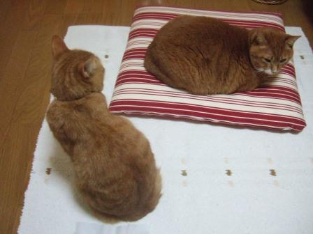 2007_junichibi890174