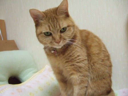 2007_junichibi890188