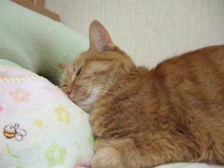 2007_junichibi890195