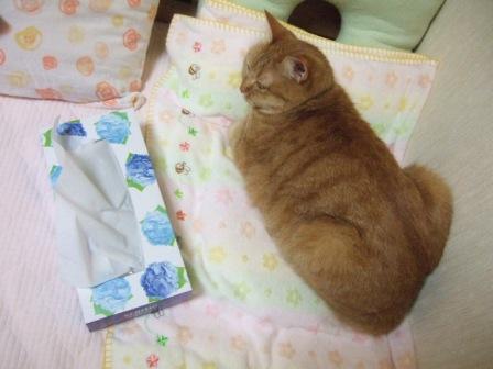 2007_junichibi890201