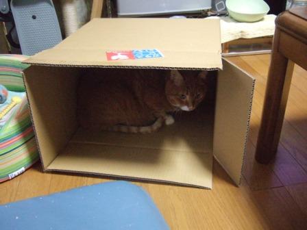 2007_junichibi920347