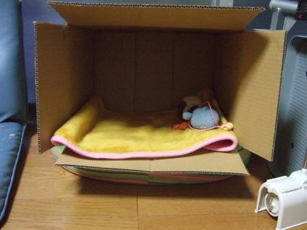 2007_junichibi920367