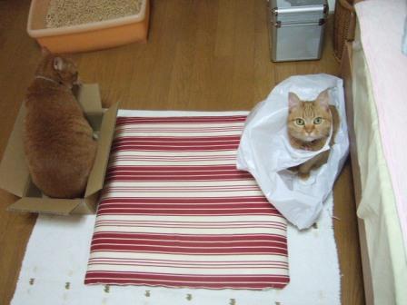 2007_junichibi940383