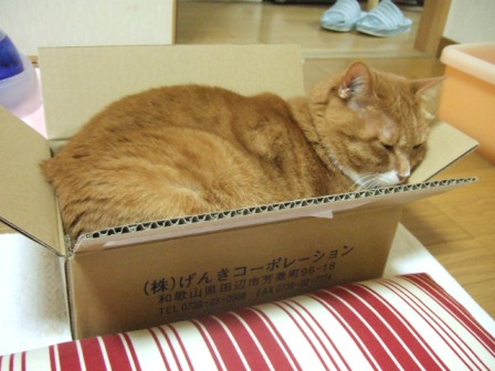 2007_junichibi940387
