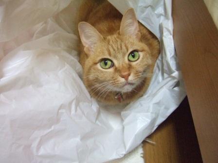 2007_junichibi940412