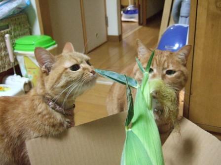 2007_junichibi950516