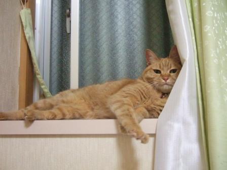 2007_junichibi980139