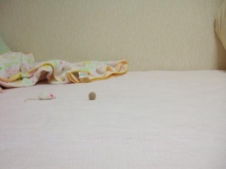 2007_junichibi980155