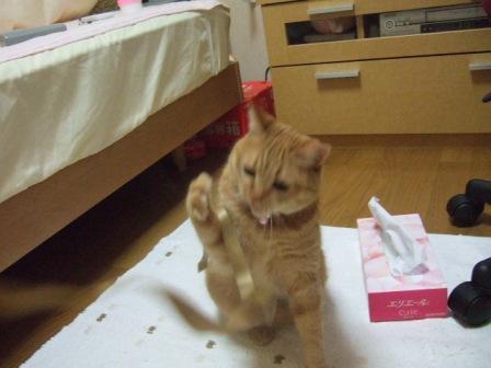 2007_junichibi980160