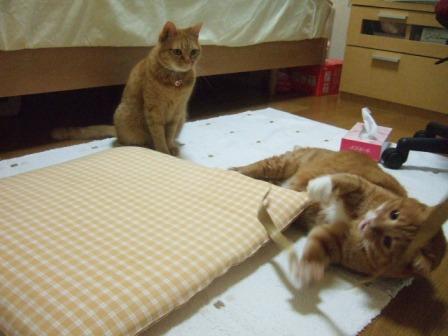2007_junichibi980173