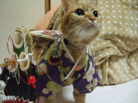 2007_junichibi1640123