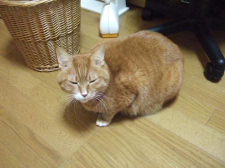 2008_junichibi1650348_2