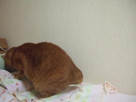 2008_junichibi1650228