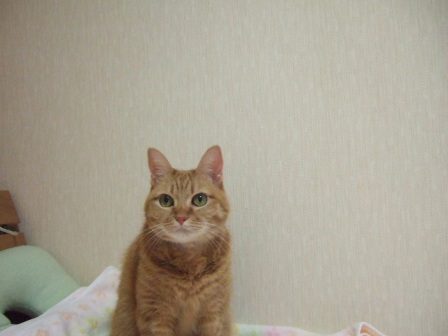 2008_junichibi1650232