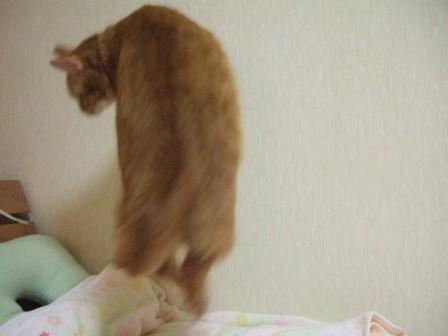 2008_junichibi1650233