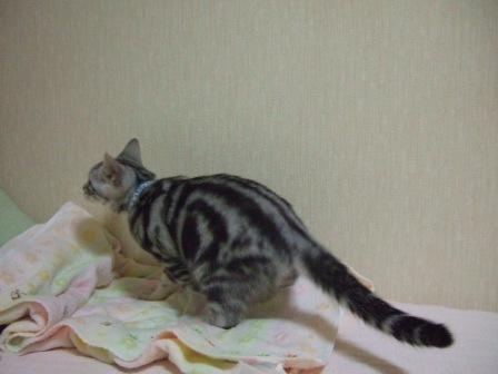 2008_junichibi1650234