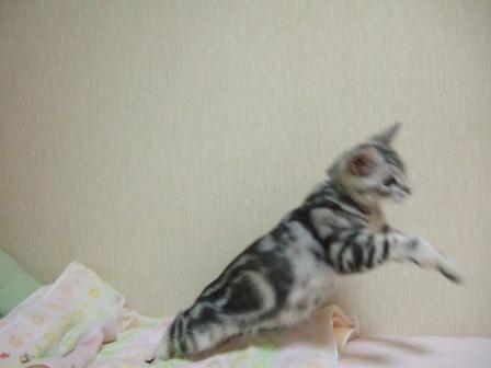2008_junichibi1650235
