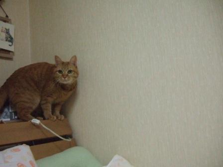 2008_junichibi1650239