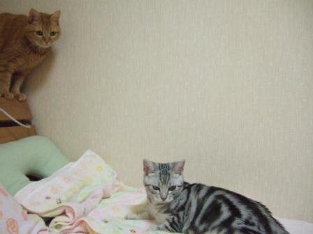 2008_junichibi1650242