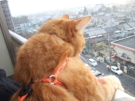 2008_junichibi1680141