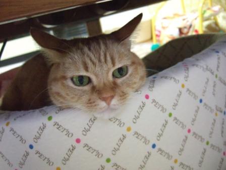 2008_junichibi1690016