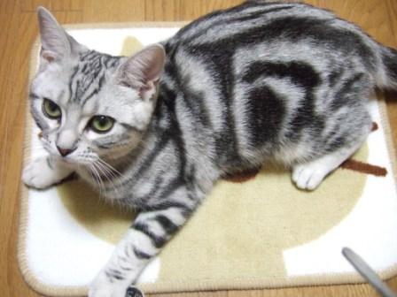 2008_junichibi1690041