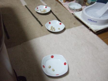 2008_junichibi1730179