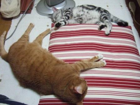 2008_junichibi1740027