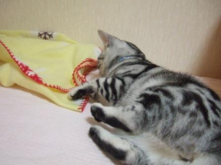 2008_junichibi1720126