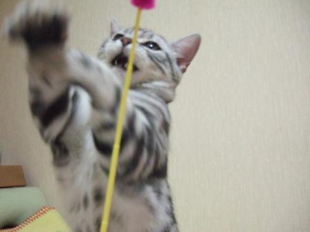 2008_junichibi1760116