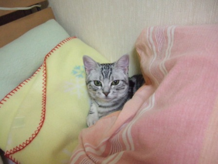 2008_junichibi1790037