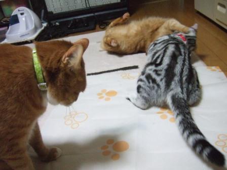 2008_junichibi1810025