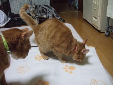 2008_junichibi1810026