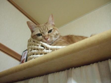2008_junichibi1830068