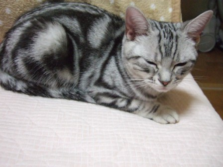 2008_junichibi1830073