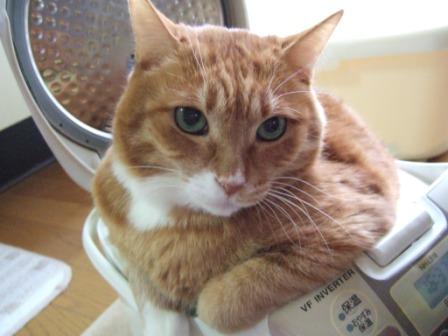 2008_junichibi1850046