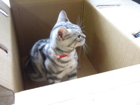 2008_junichibi1850055