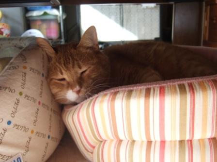2008_junichibi1850017