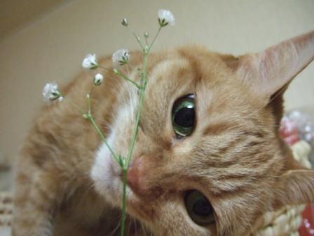 2008_junichibi1880059