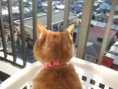 2008_junichibi1880025