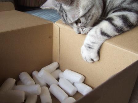 2008_junichibi1890038