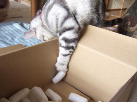 2008_junichibi1890043