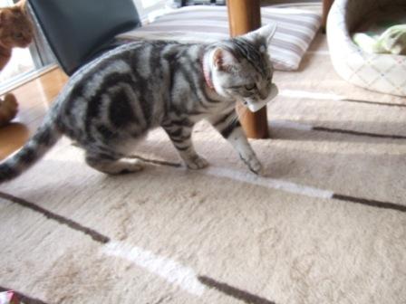 2008_junichibi1890044